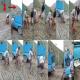 عامل شکنجه بی رحمانه سگ شکاری دستگیر شد +تصاویر