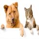 آیا سگ ها و گربه ها واقعا دشمن هستند؟