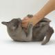 ۱۰ کاری که گربهها از آنها متنفر هستند