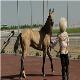 اسب های فاقد تست مشمشه در اماکن تفریحی استفاده نشوند