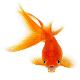 راه اندازی بزرگترین مجتمع پرورش ماهیان زینتی
