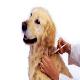 واکسیناسیون بیش از 4 هزار قلاده سگ در اسفراین علیه هاری