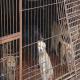 سلاخی سگ و گربه ها در جشن چینی ها