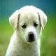 سگ خانگی نوزاد سه روزه را کشت