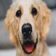 ۲ ماه حبس برای متهم به سگ آزاری در آستارا