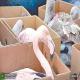 چه حیواناتی در ایران بیشتر قاچاق می شوند؟