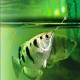 کشف ماهیای که صورت انسان را تشخیص میدهد