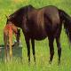 10 نکته کاربردی در تغذیه اسب ها