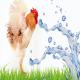 اثرات عنصر روی بر تنش گرمایی جوجههای گوشتی