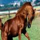 عکسی وحشتناک از خون دماغ شدن اسب