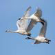 چرا پرندگان سفر می کنند؟