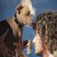 معرفی زشت ترین سگ دنیا همراه با عکس