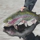 تخم دهی مولدین ماهی قزل آلای رنگین کمان
