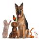 بیماریهایی که حیوانات خانگی به انسان منتقل میکنند
