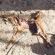 حیوان درنده شهداد توسط دوربین ها هم شناسایی نشد!