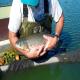 پرورش ماهیان گرمابی (بخش پنجم)