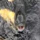پرورش ماهیان گرمابی (بخش ششم)