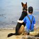 سگها پرستاران کودکان مبتلا به صرع