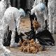 آنفلوانزای مرغی در چند قدمی ایران
