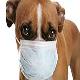 آشنایی با بیماریهای تنفسی در سگها