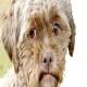 سگی با صورت شبیه به انسان
