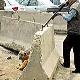 شخصاً با اسلحه شکاری به شکار سگ های بدونصاحب می روند!