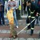 شکنجه شغال سرمازده توسط ماموران شهرداری!