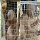 خبر کشف حیوان عجیب وحشی در هند شایعه است