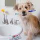 بهداشت دهان و دندان در سگ ها