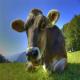 پودر سبز باعث افزایش مقدار شیر گاو می شود