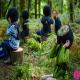 دیدن جنگل از چشم حیوانات با واقعیت مجازی
