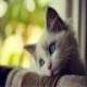 10 نکته ای که باید قبل از نگهداری گربه ها بدانید