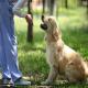 هشت نشانه از سگ هایی که نیاز به توجه بیشتر صاحبانشان دارند