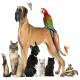 اولین نمایشگاه حیوانات خانگی در مشهد