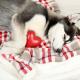 آشنای با بیماریهای قلبی سگها