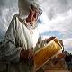مسمومیت زنبوران عسل توسط آفت کش های زراعی