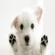 ۱۱ کاری که سگ شما از آنها متنفر است