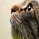 گربهها در مورد ما چه فکری میکنند؟!