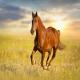 تشخیص حالات اسب با توجه به حرکات بدن