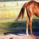 تشخیص حالات اسب با توجه به موقعیت قرار گرفتن دم
