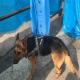 سگ زنده یاب پلیس به خاطر شدت حرارت زیر آوار دچار سوختگی شد