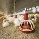 کیفیت هوای شبانه در مرغداری