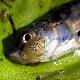 دانستنی هایی درباره بهداشت و بیماری های ماهی