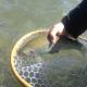 معرفی چند دارو در زمینه صنعت پرورش ماهی