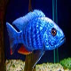 ماهی سیکلید بلو الکتریک (Electric Blue African Cichlid)