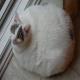 ده عامل اضافه وزن در گربه ها