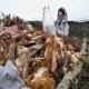 پیشگیری از همهگیر شدن آنفلوانزای پرندگان