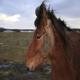 بیماری های پوستی در اسب