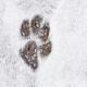سگهای معروفی که تحمل آبو هوای سرد را دارند