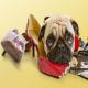 جلوگیری از جویدن لوازم توسط سگها